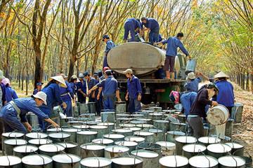 Tập đoàn Cao su cần thoái hơn 2.000 tỷ đồng vốn tại các đơn vị ngoài ngành