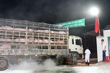 Việt Nam sắp nhập lợn sống từ Thái Lan