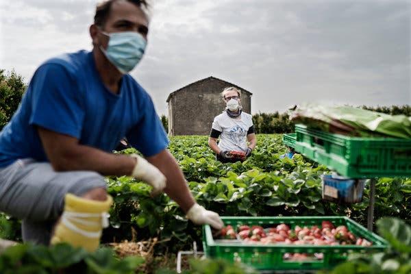 Thất nghiệp vì dịch Covid-19, người Italia bỏ thành thị về quê làm nông