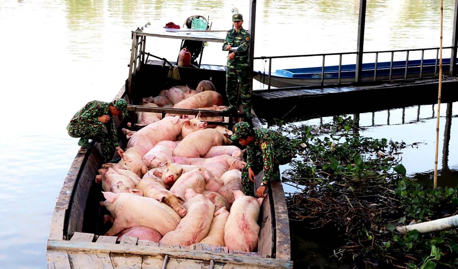 Giá lợn hơi tiếp tục rơi dưới ngưỡng 100.000 đồng/kg