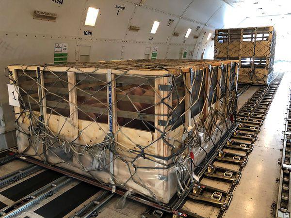 Bloomberg: Trong khi nhiều hãng bay lao đao vì dịch Covid-19, công ty hàng không này lại lãi lớn nhờ… chở lợn cho Trung Quốc
