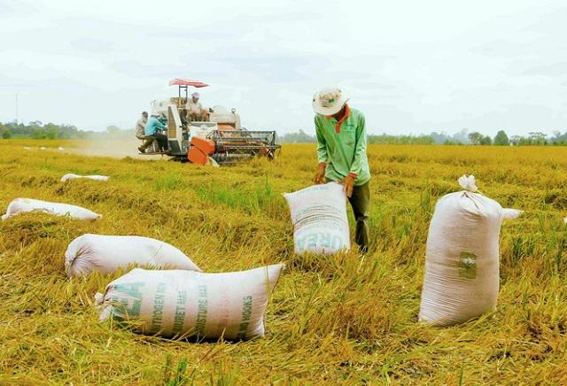 Gạo xuất khẩu tăng mạnh về khối lượng lẫn giá trị