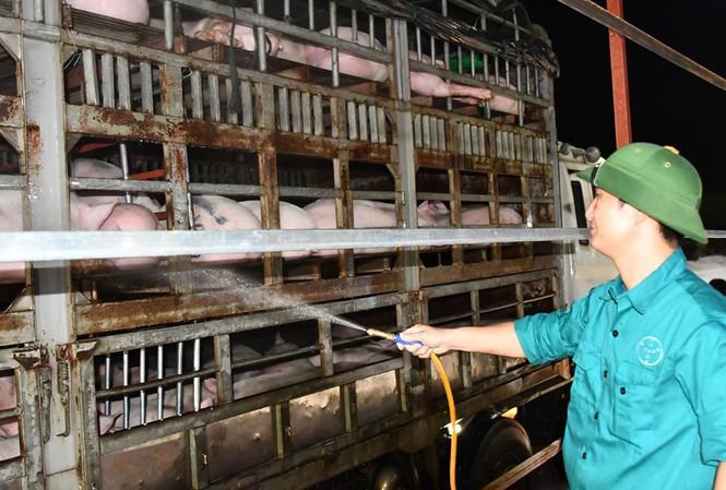 Vừa cho nhập lợn sống từ Thái Lan, vừa 'hỏa tốc' ngăn lợn nhập khẩn từ Lào, Campuchia