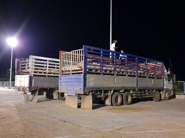 Lợn sống nhập khẩu đã về đến Việt Nam