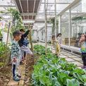 <p> Mặc dù diện tích đất không lớn, chỉ khoảng 600 m2, chủ đầu tư quyết tâm dành hơn 50% cho khu vườn, để tạo không gian học tập gần gũi với thiên nhiên, nơi trẻ em có thể học hỏi, kết nối và tiếp xúc với thiên nhiên thường xuyên hơn hơn các lớp học thông thường.</p>