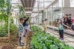 Vườn rau, cây leo bao quanh lớp học giữa Hạ Long, Quảng Ninh