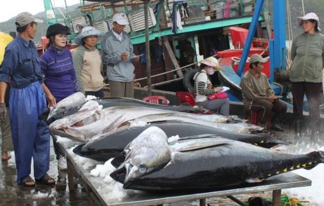 EU sẽ miễn thuế cho 11.500 tấn cá ngừ đóng hộp từ Việt Nam