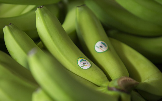 HAGL Agrico: 68 nhà đầu tư cá nhân mua 200 tỷ trái phiếu, lãi suất 9,5%/năm đảm bảo bằng vườn cây ăn quả