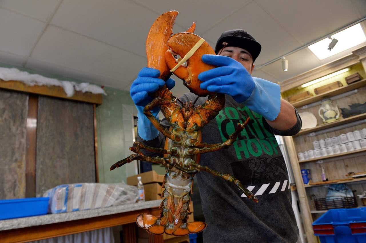 Mỹ dọa áp thuế với hải sản Trung Quốc để bảo vệ ngành tôm hùm