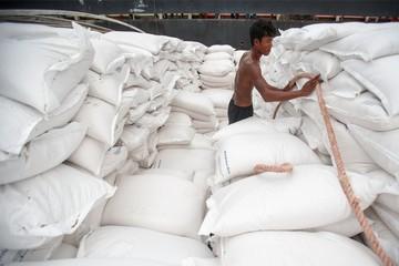 Giá gạo xuất khẩu của Việt Nam có thể tiếp tục giảm trong những tuần tới