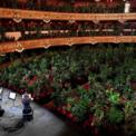 """<p> Gần 2.300 chậu cây được đặt trên các hàng ghế khán giả trong buổi diễn thử đầu tiên vào ngày 22/6 khi nhà hát Gran Teatre del Liceu tại Barcelona, Tây Ban Nha mở cửa trở lại sau dịch Covid-19. Nhà tổ chức cho biết ý tưởng này nhằm phản ánh tình thế của loài người trong đại dịch Covid-19. """"Thiên nhiên đã phát triển và chiếm lấy không gian mà chúng ta đã cướp từ chúng"""", giám đốc sản xuất Eugenio Ampudio nói. Ảnh: <em>Reuters</em>.</p>"""