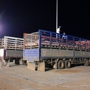 Giá lợn trong nước giảm sau khi nhập lợn sống từ Thái Lan