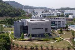 Sunday Times: Mẫu virus gần giống chủng gây Covid-19 từng được gửi đến Vũ Hán từ 2013