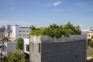 Rừng cây ăn quả nhiệt đới phủ kín mái nhà ở Đà Nẵng
