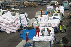 Giá gạo xuất khẩu của Việt Nam lên cao nhất 3 tuần, gạo Thái thấp nhất 4 tháng