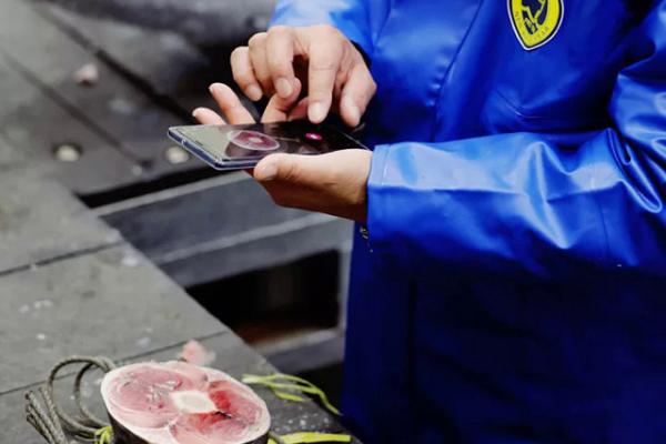 Dùng AI đánh giá chất lượng cá ngừ