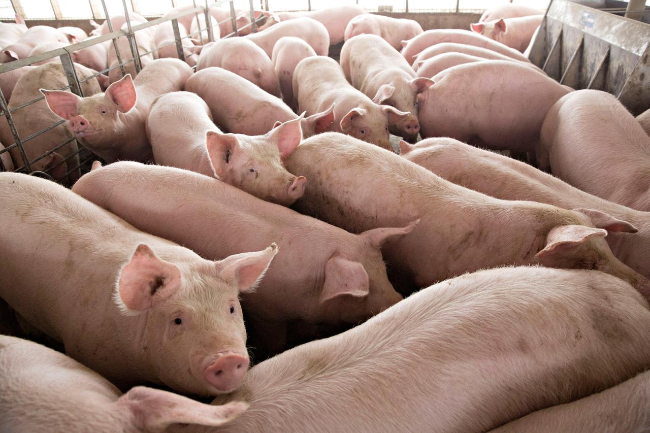 Bộ Nông nghiệp chỉ tên nhiều doanh nghiệp không phối hợp giảm giá thịt lợn