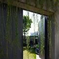 <p> Lối cổng vào kín đáo được làm mềm mại nhờ rèm cây buông rủ.</p>