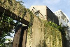 Phía sau hình ảnh kín cổng cao tường của ngôi nhà ở TP HCM là không gian gần gũi không ngờ