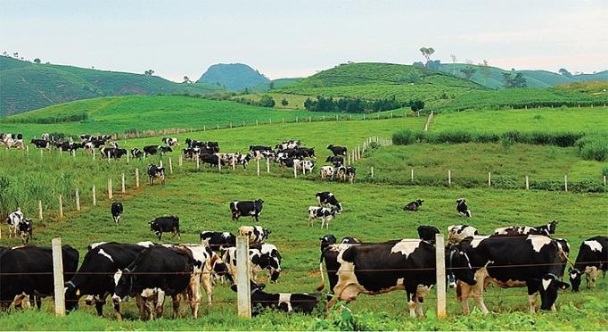 Mộc Châu Milk: Biên lợi nhuận gộp lên gần 30%, mua bán hàng hóa 140 tỷ đồng với Vinamilk