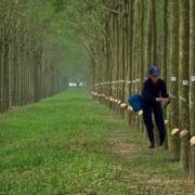 Cao su Đồng Phú báo lãi quý II tăng 18%
