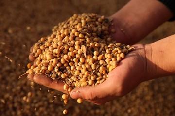 Trung Quốc chạy đua nhập khẩu nông sản Mỹ