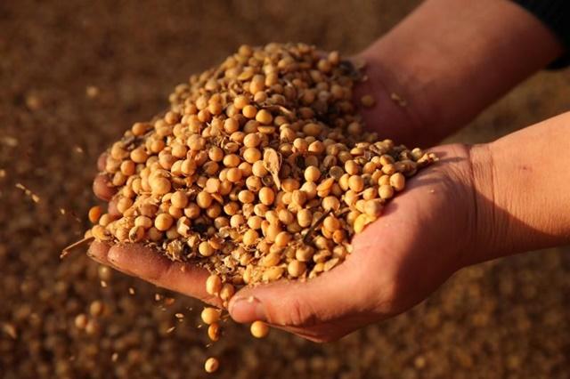câu hỏi về việc Trung Quốc thực sự cần bao nhiêu đậu tương sẽ tác động khá lớn tới hoạt động mua nông sản của nước này.