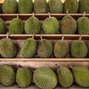 'Tình yêu sầu riêng' vượt Covid-19 tại Malaysia