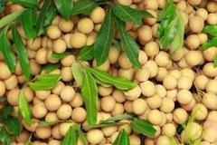 16,5 tấn nhãn tươi Việt Nam xuất khẩu sang Australia