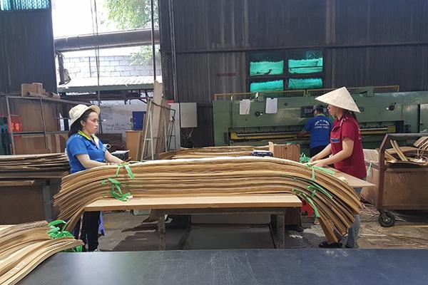 Không dung túng doanh nghiệp phá giá gỗ ván dán