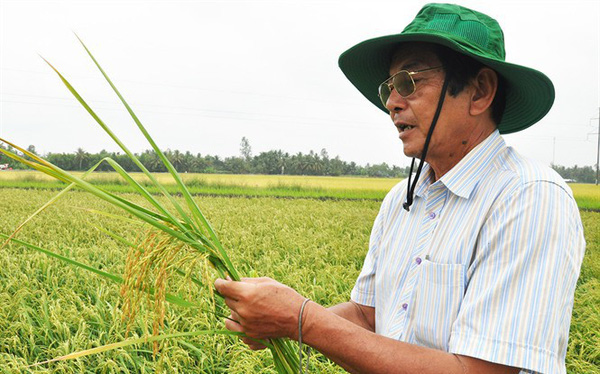 Cha đẻ gạo ngon nhất thế giới: Xuất khẩu gạo vào Mỹ, châu Âu không khó!