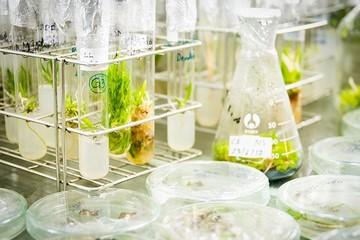 Đà Nẵng đầu tư hơn 651 tỷ đồng để nâng cấp Trung tâm Công nghệ sinh học