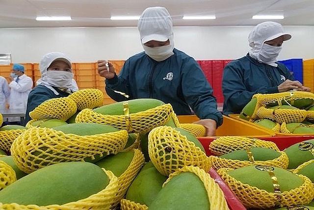 Xuất khẩu trái cây sang Mỹ vướng do thiếu kiểm dịch viên
