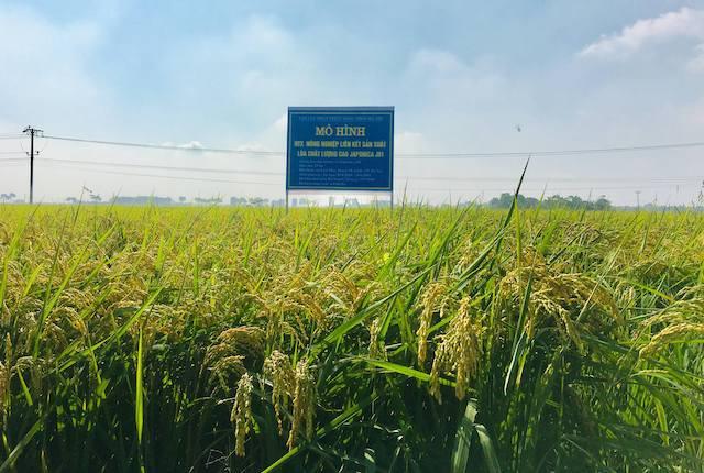 Xuất khẩu gạo sang EU hậu EVFTA: Rào cản nhỏ có chặn bước cơ hội lớn?