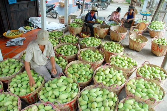 Lời cảnh tỉnh cho trái cây xuất khẩu