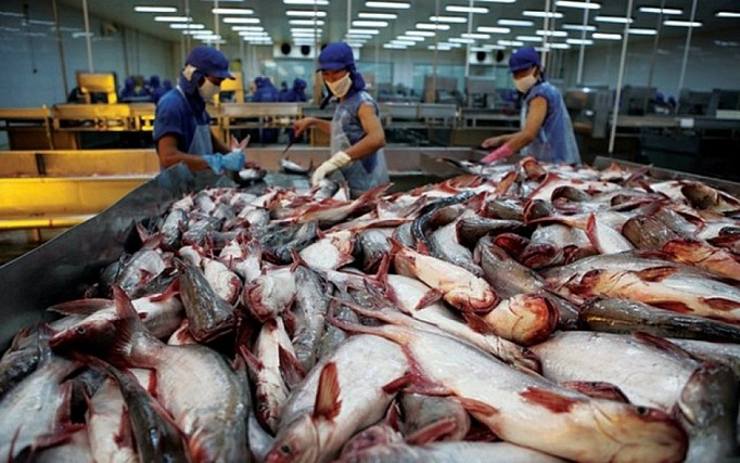 Xuất khẩu cá tra sang thị trường ASEAN giảm mạnh