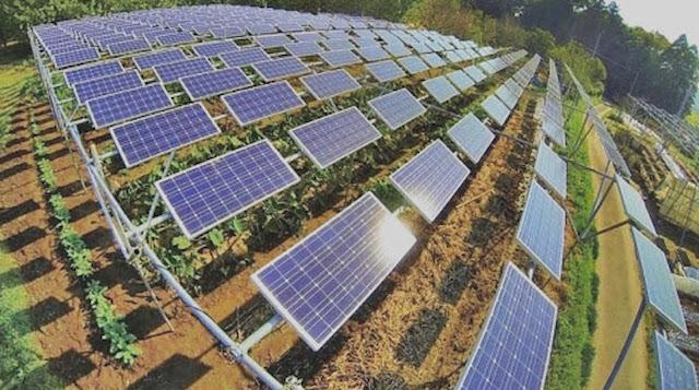 Ồ ạt đầu tư vào điện mặt trời áp mái: Trả giá cho sự hào hứng