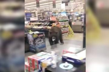 Gấu 'đi siêu thị' ở Mỹ