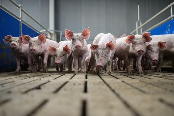 Trung Quốc xả 20.000 tấn thịt đông lạnh từ kho dự trữ quốc gia