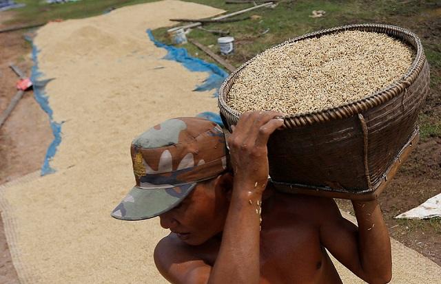 India Times: Giá gạo Việt Nam sẽ tiếp tục tăng