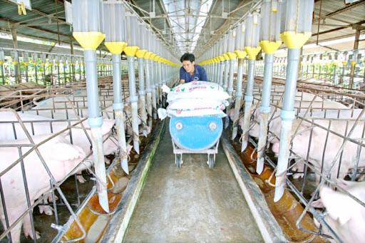 Lãi lớn, công ty nuôi lợn ở Đồng Nai tạm ứng cổ tức 18% bằng tiền