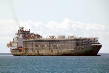 Tàu chở hơn 5.800 con bò mất tích ngoài khơi Nhật Bản