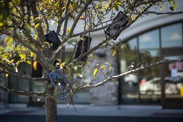 Tại sao hàng loạt tài xế Amazon treo điện thoại lên cây?