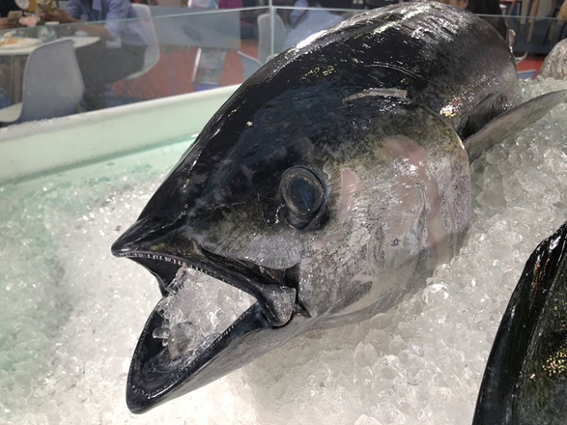Cá ngừ Việt sang châu Âu tăng vọt nhờ EVFTA