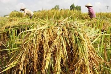 Nói '90% người Việt Nam ăn gạo bẩn' là vô căn cứ