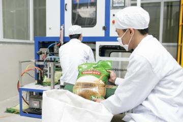 Chính phủ ban hành quy định chứng nhận chủng loại gạo thơm xuất khẩu sang EU