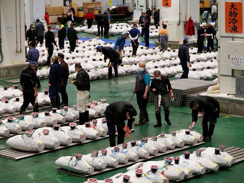 Chịu đòn giáng Covid-19, chợ cá ngừ lớn nhất thế giới tại Nhật kinh doanh ra sao?