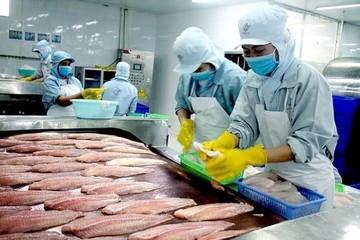 Xuất khẩu cá tra sang Trung Quốc dự báo tiếp tục gặp khó