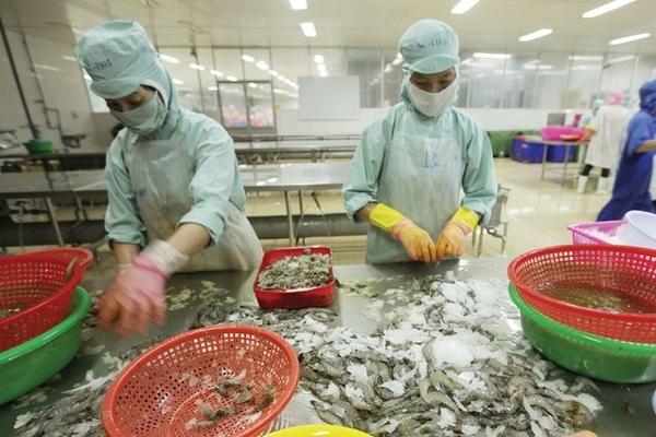 Xuất khẩu tôm bắt đầu tăng tốc với EVFTA