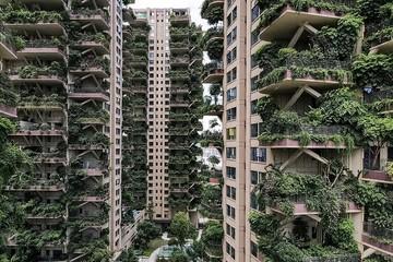 Tổ hợp căn hộ 'khu rừng thẳng đứng' hóa ổ muỗi ở Trung Quốc